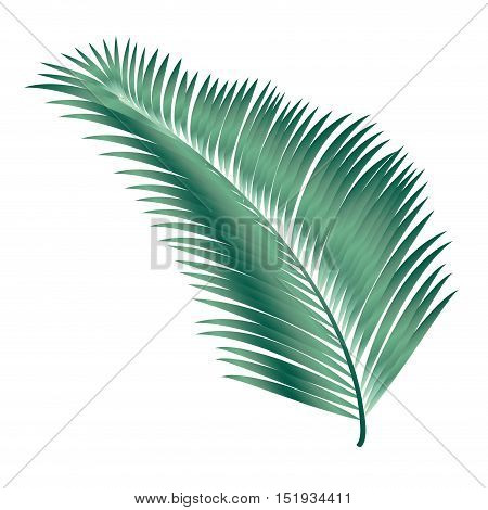 Palm tree leaves. Palm branch leaf isolated on white background background. Decoration for Jewish Holiday Sukkot. Tropical. Vector illustration. Summer