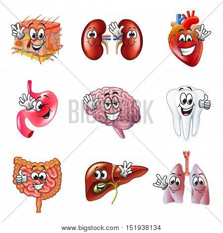 Funny cartoon human organs detailed realistic vector set