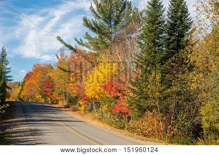 Trees in autumn colors along the road near Saint-Jerome Laurentides.