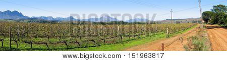 Grape Farm, Stellenbosch, Cape Town South Africa 11asa