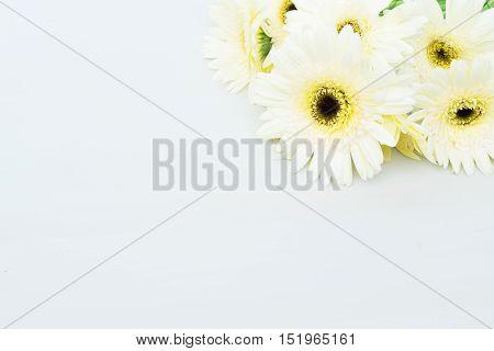 Beige gerbera flowers on gray wooden table