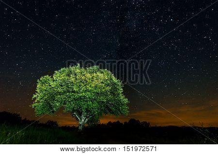 Night of the isolated tree under the night sky full of stars