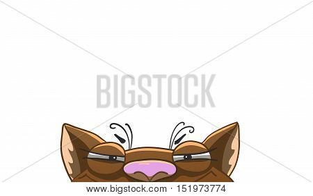 Tricky funny cat background template. Half of face. Vector illustration isolated on white.