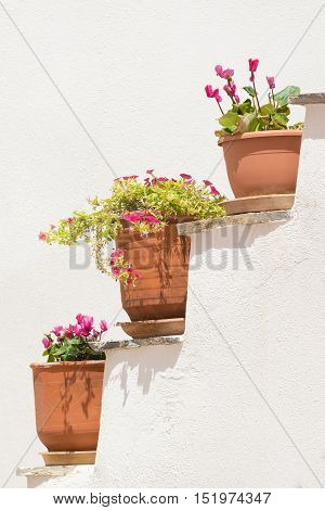Three pots with flowers against a white wall.