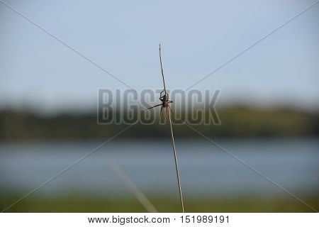 a small spider clinging to a tall weed.