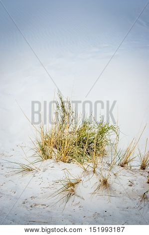 close up of plants in White Sands National Park New Mexico USA