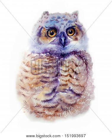 Cute Owl. Watercolor Owl. Owl Tee Shirt illustration. Ethnic background. Watercolor bird