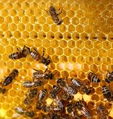 honey comb and a bee poster