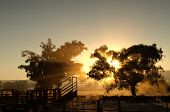 sunrise coming through the trees with rays of light over cattle and cattleyards poster