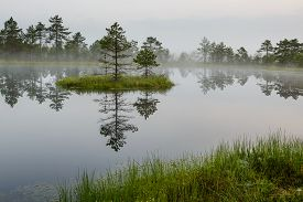 Bog landscape with small island in the lake and reflection of the pine trees.