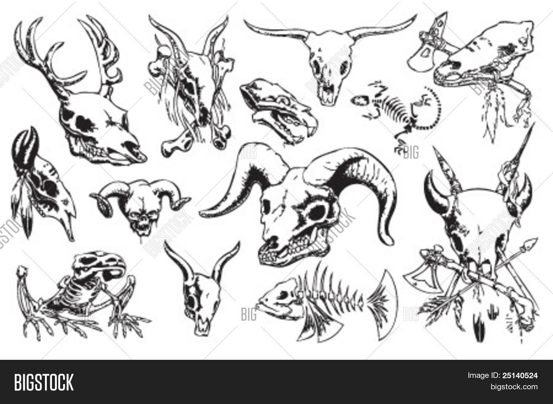 animal skulls bones vector photo free trial bigstock