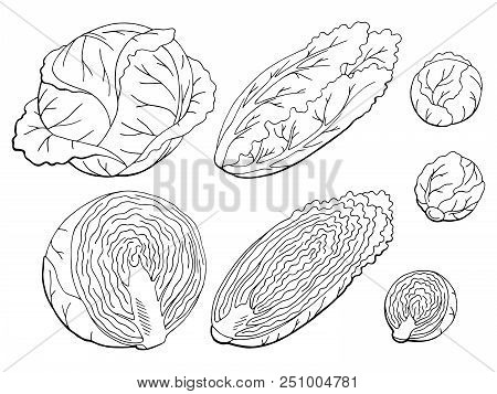 Cabbage Set Graphic Black White Isolated Sketch Illustration Vector