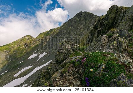Grass And Some Purple Flowers On A Rocky Cliffs Of Fagaras Mountains In Romania. Beautiful Summer We