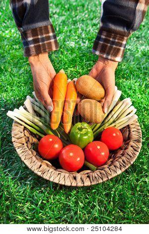 Farmer with a basket full of biological vegetables