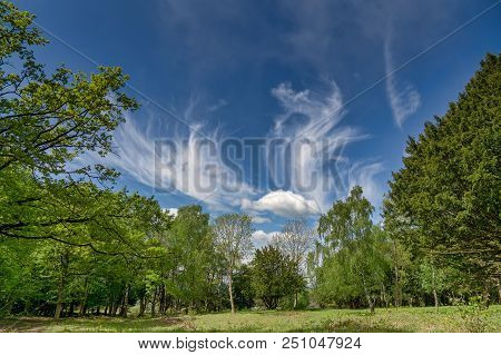 Spreading Cirrus Clouds From An Approaching Warm Front, Above A Clearing In Woodland.