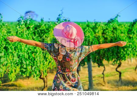 Vineyard Winery Grape Picking. Harvest Farming To Make White Wine. Carefree Blonde Farmer With Open