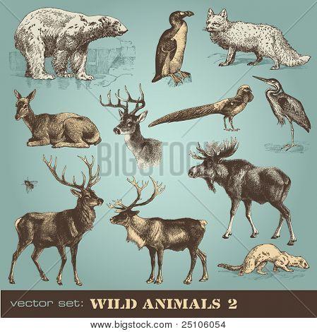 vector set: wild animals (2)