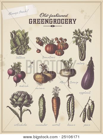old-fashioned greengrocery - vintage collection of different vegetables (set 1)