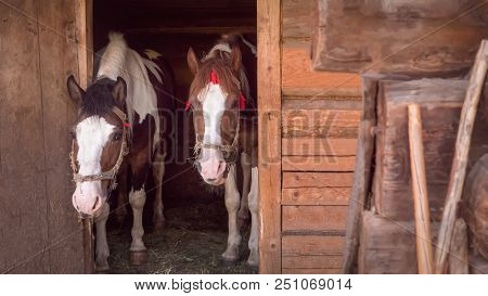 Two Horses Are Waiting For Oat At The Stable Animals Feeding Careful Attitude To The Animals Wooden