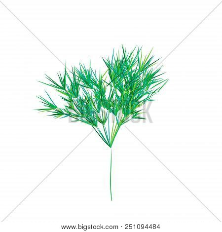 Reed Stems , Sugar Cane Or Bamboo Leaves, Thin Narrow Leaves.different Shades Of Green. Isolated On