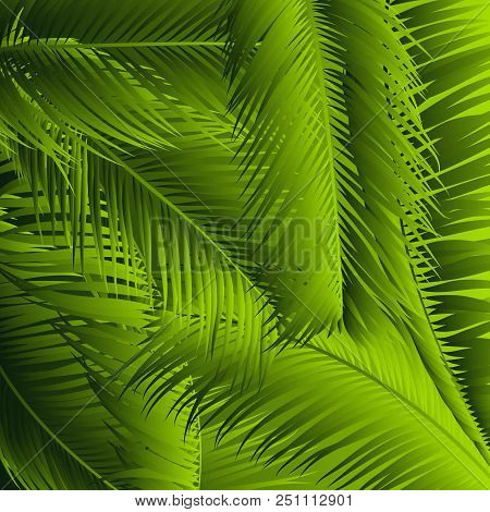Palm Leaves Isolated. Realistic Branches Set. Vector Tropical Foliage. Floral Elements. Illustration