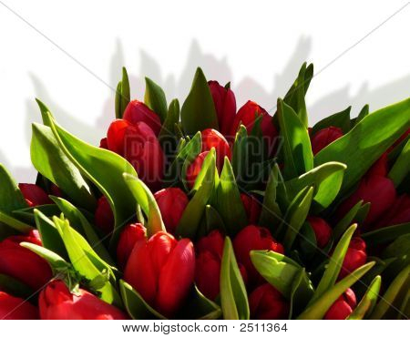 Red Tulips Frame