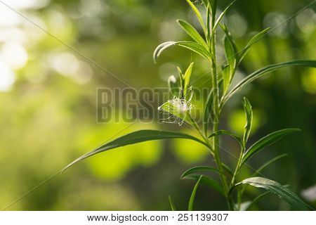 Green Plant Environment. Green Plant Background. Desktop Image. Nature Green Plant. Bright Green Pla