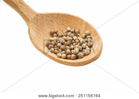 Seeds Of Coriander On A White Background In A Wooden Spoon. Cilantro Isolated. Coriandrum Sativum. C