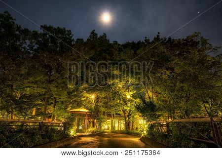 Ryokan Forest At Night