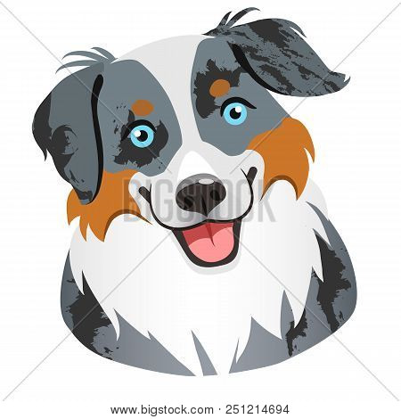 Australian Shepherd Dog Face Portrait Cartoon Illustration.  Cute Friendly Blue Merle Tricolor Herdi