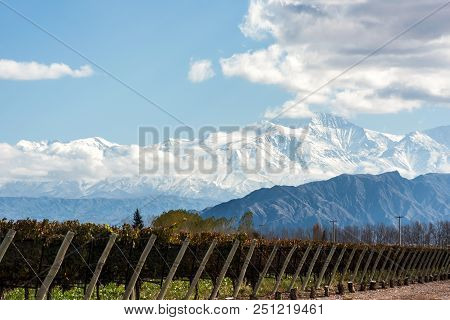 Early Morning In The Late Autumn: Volcano Aconcagua Cordillera And Vineyard. Andes Mountain Range, I
