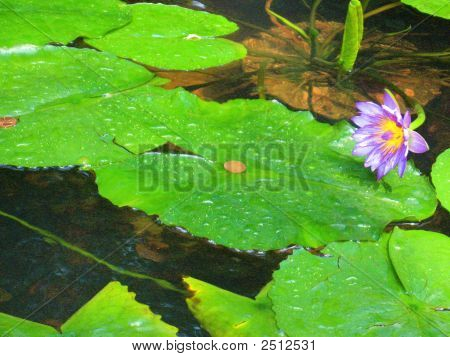 Purple Floating Flowers Make Cents
