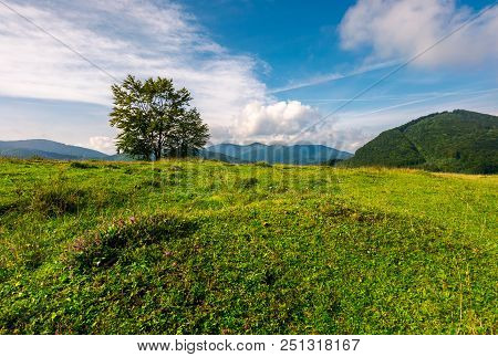 Tree On The Grassy Meadow In Mountains. Beautiful Scenery In Early Autumn. Wonderful Forenoon Weathe