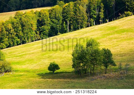 Trees On A Hillside Meadow. Wonderful Nature Scenery In Early Autumn
