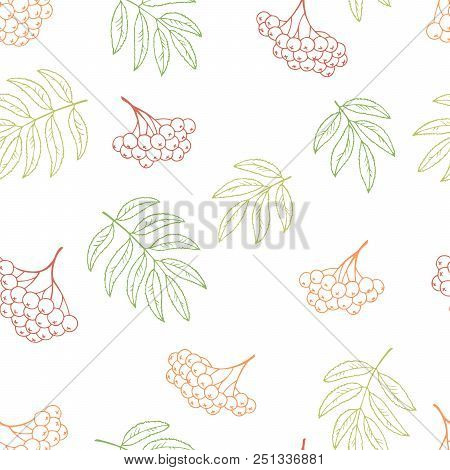 Rowan Berry Graphic Color Seamless Pattern Background Illustration Vector