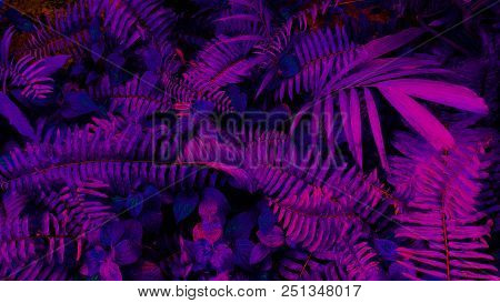 Tropical leaf forest glow in the black light background. High contrast. poster
