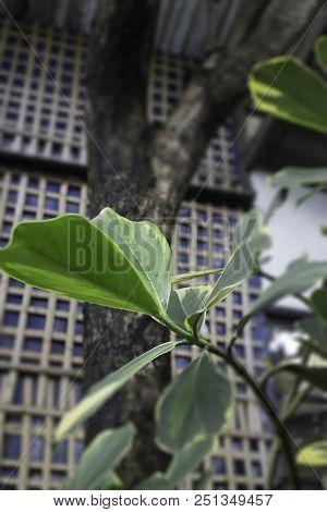 Fresh Green Nature Rain Water Drop On Leaf, Stock Photo