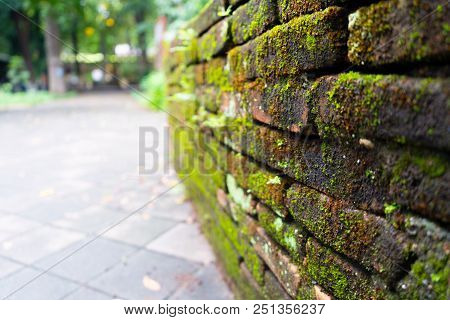 Green Moss Background Beautiful In Nature. Closeup Of Moss On Brick Wall