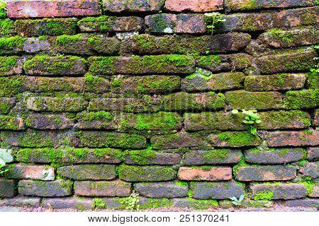 Green Moss Background Beautiful In Nature.closeup Of Moss On Brick Wall