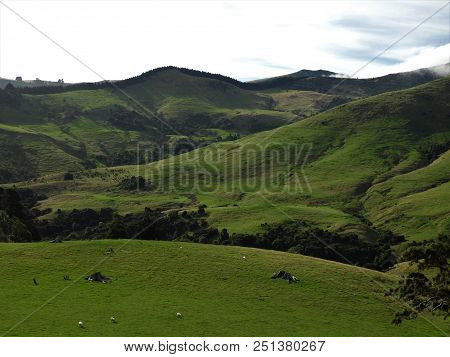 The Sheep Are Grazing In The Green Hills