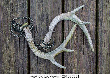 Deer Antlers Used For Rattling Horns During Hunting Season. Fun Recreational Outdoor Sport Activity