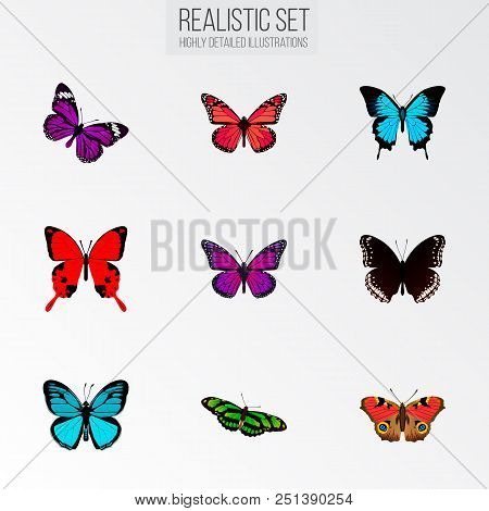 Set Of Moth Realistic Symbols With Papilio Ulysses, Birdwing, Precis Almana And Other Icons For Your