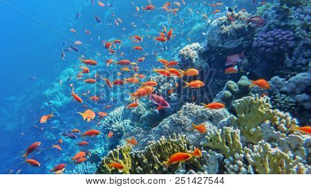 Underwater World Of The Red Sea, Corals, Goldfish And Other Fish, Against The Background Of The Sea