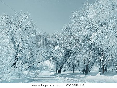 Winter White Scenery, Nature And Winter Weather