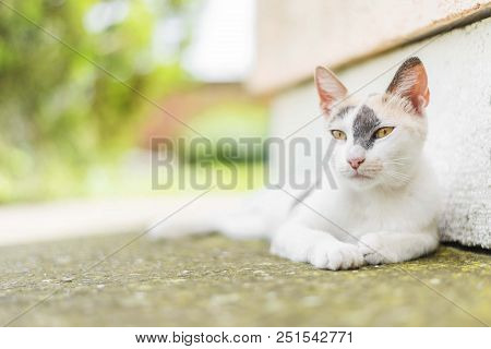 Cute White Cat Lying Down On Concrete. White Cat Isolated. Cat Portrait. Cat Background