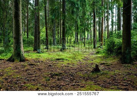 Summer Forest Trees. Nature Green Wood Sunlight Backgrounds.