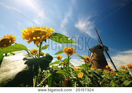 dutch windmill