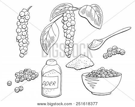 Black Pepper Plant Set Graphic Isolated Sketch Illustration Vector