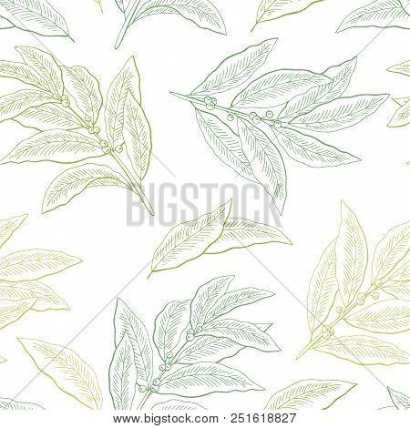Bay Leaf Graphic Green Color Seamless Pattern Background Sketch Illustration Vector