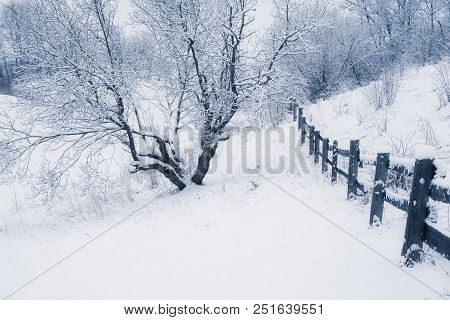 Snowy Weather. Winter Woodland Tree Landscape Nature